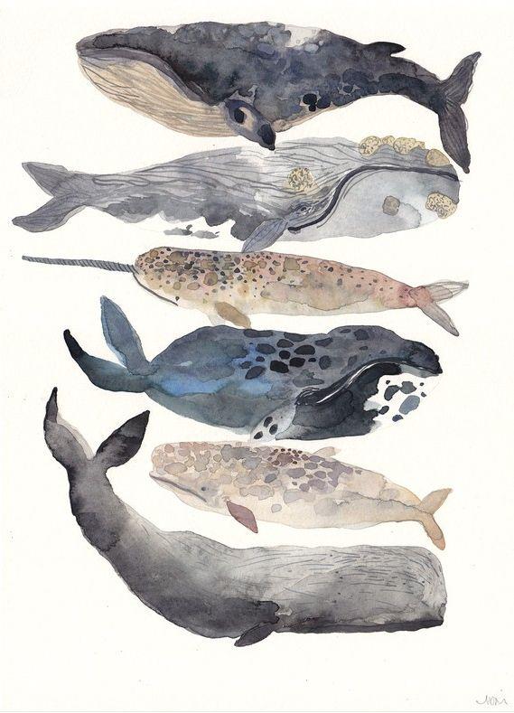 Whales painting // dibujo ballenas