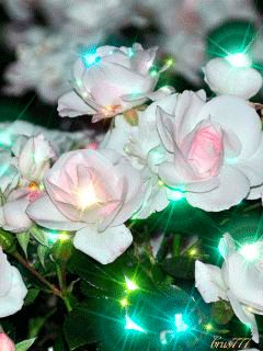 Анимация. Красивые цветы…