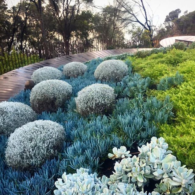 Coastal Garden via Nathan Burkett Design @nathanburkettdesign…