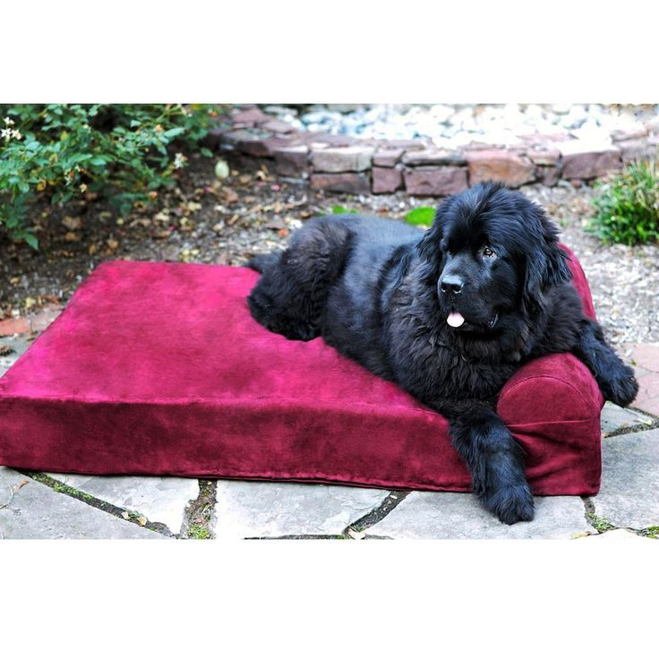 Big Barker 7-inch Pillowtop Orthopedic Dog Bed Headrest Edition XL Size in