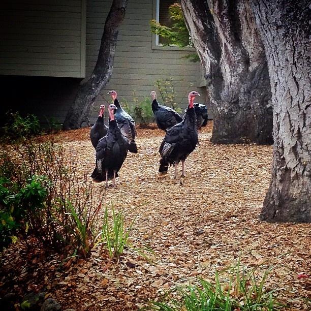 Waking up to Wild Turkey and Coffee at #saycreate: Create 2012, Wild Turkeys