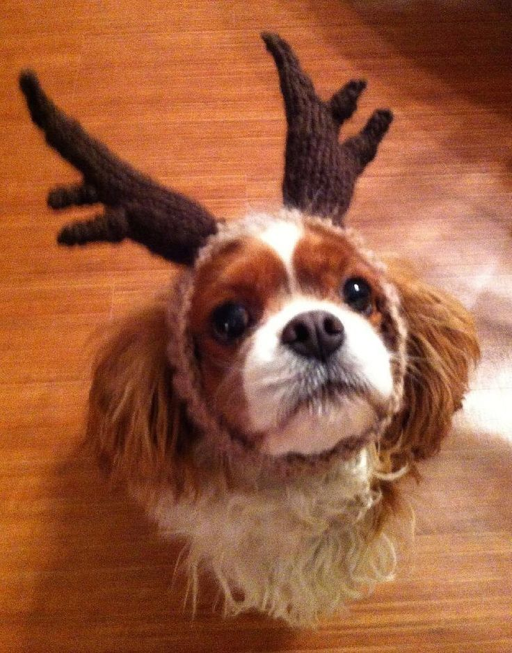 Want a quick gift for your dog loving friends. In just 2-3 hours you can make a set of Reindeer Antlers.The stretchiness of this rib headband fits most small to medium size dogs.Cast on 60 stitches to make the headband large enough for a big dog or small child.I used scrap yarn from my ROFL Monkey Hat Pattern. This Free pattern is my holiday gift to all my knitting friends. Have fun with this in all your family photos:)Merry Christmas!