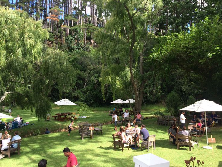 Eagles nest vineyard, Constantia. Wine tasting, platters and picnics available