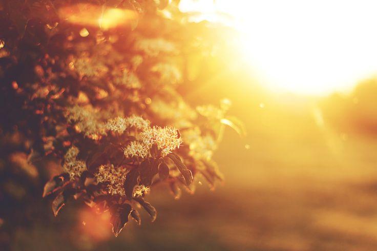 """""""Sun dance"""" by Hristo Yordanov"""