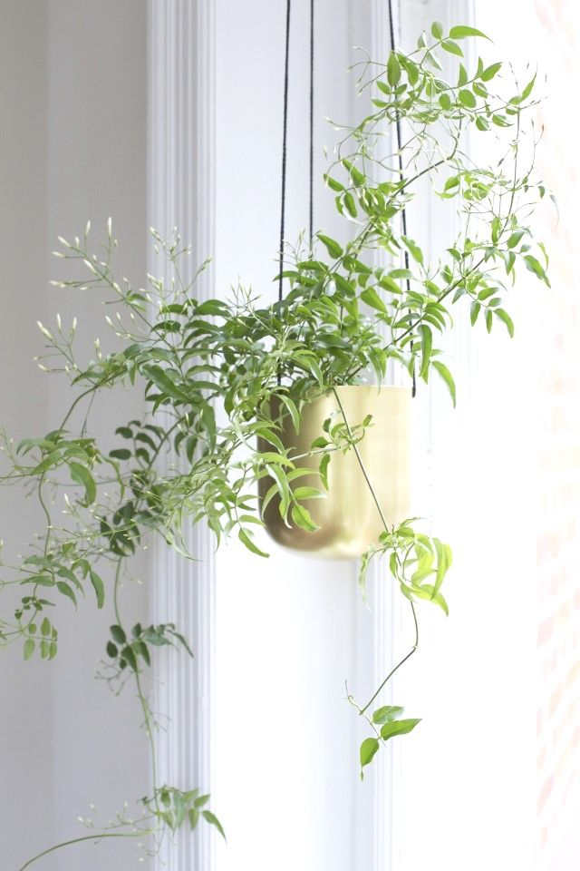 Trendspan växter i ampel