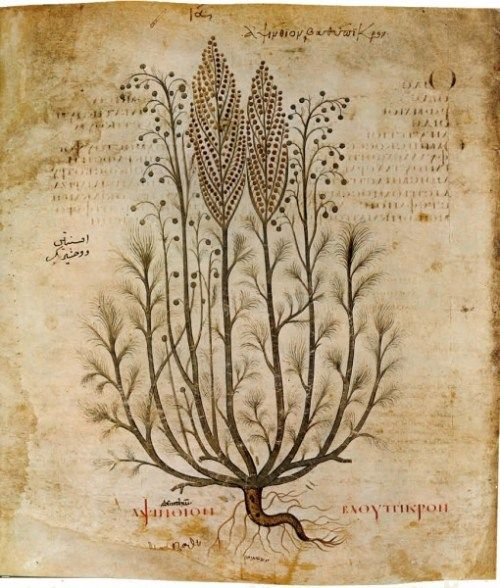 """""""Botanical illustration is the art of depicting the form, colour, and details of plant species, frequently in watercolour paintings. These are often printed with a botanical description in book, magazines, and other media."""""""
