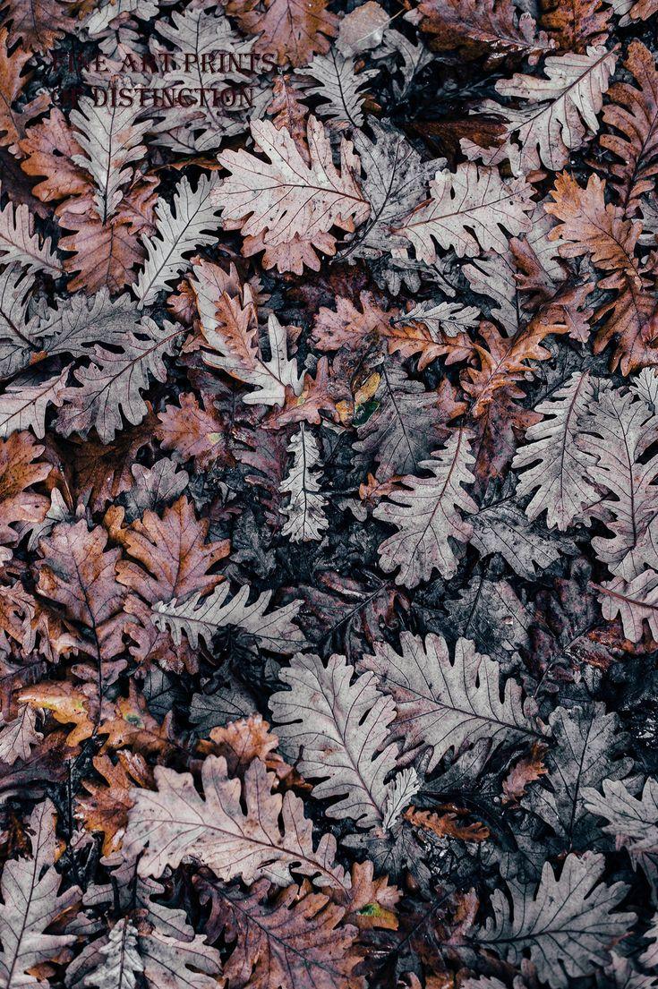 Brown and Gray Fall Oak Leaves Art Print