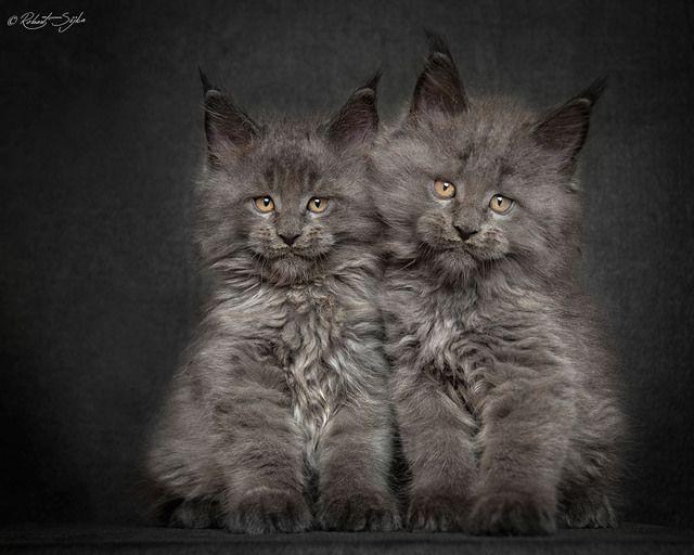 kitten with crusty eyes