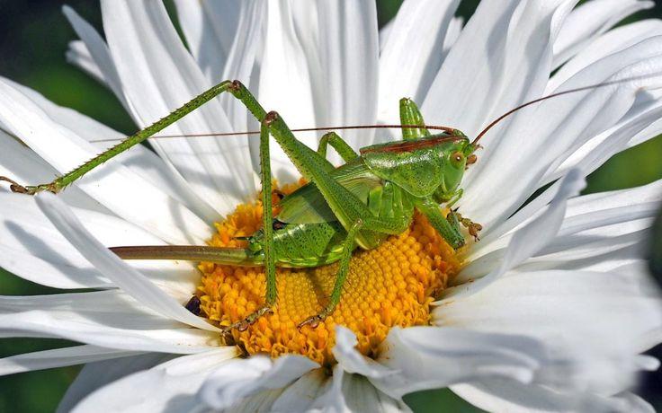 Manger des insectes ? – séquence pédagogique A1