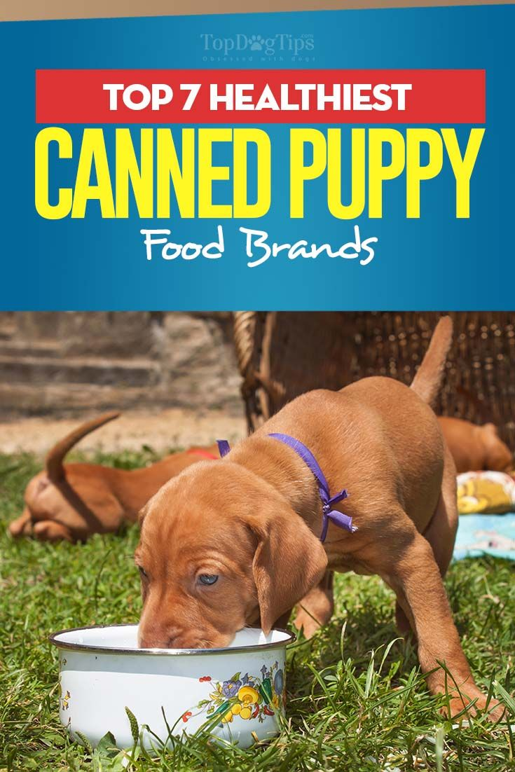 7 Best Canned Foods For Puppies Puppy Food Brands Best Puppy Food Puppy Food