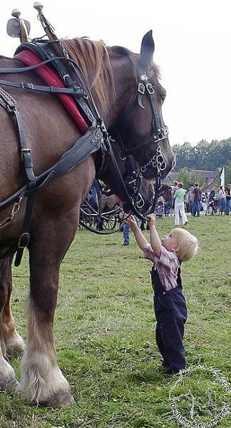 Breton horses                                                                                                                                                                                 More