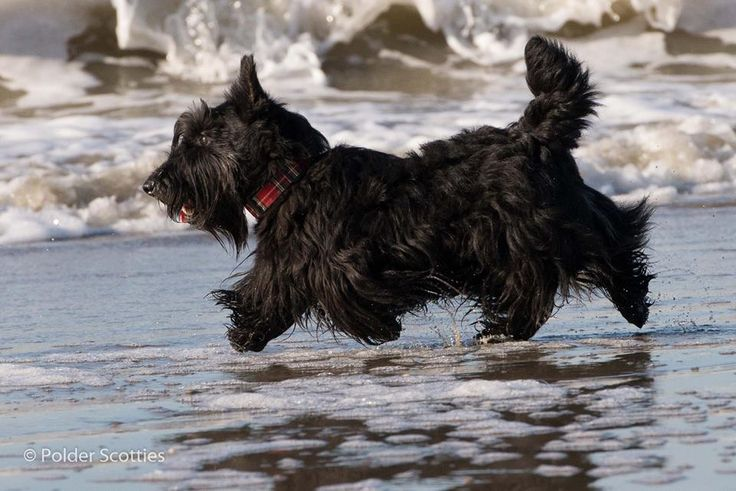 Where Can I Walk My Dogs In Cairns