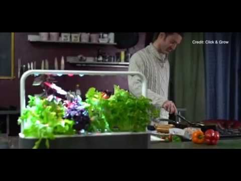 Build a smart garden in your kitchen - Contains up to 600% more antioxid...