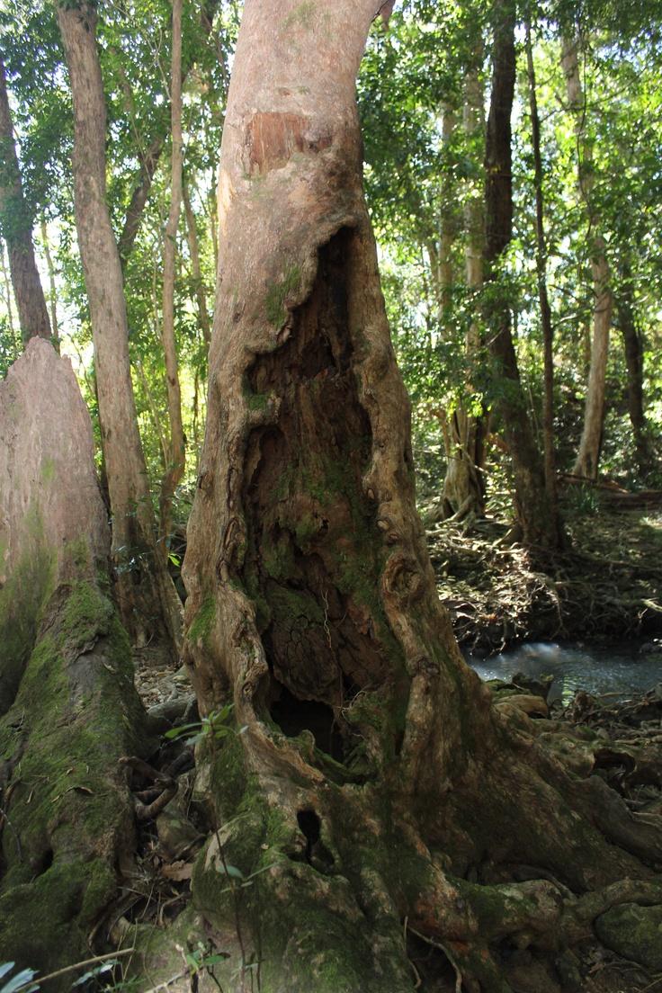 Belli Creek near Kenilworth Queensland Australia.