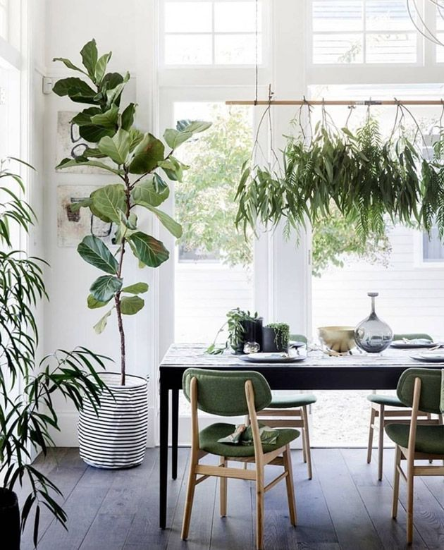 the beauty of a fiddle leaf fig - Fiddle Leaf Fig Tree Care