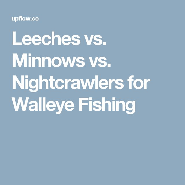 Leeches vs. Minnows vs. Nightcrawlers for Walleye Fishing