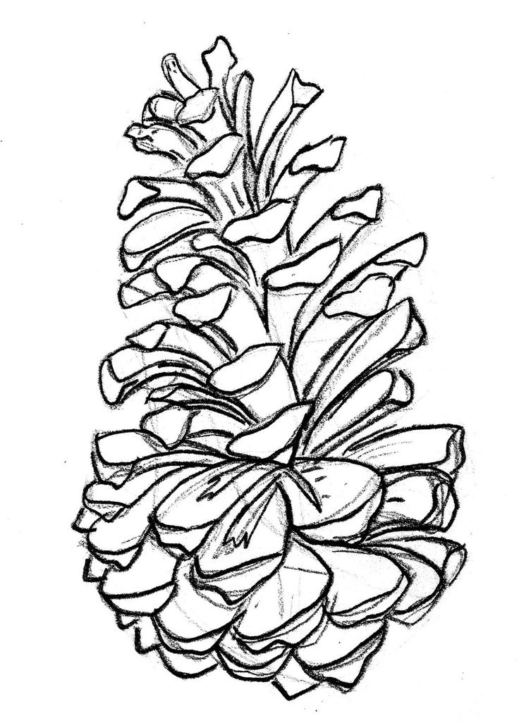 1000 images about pine tattoo