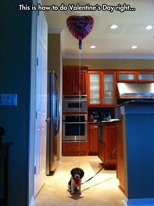 The cutest Valentine's Day gift…if a guy gave me that puppy as a present I would probably marry him..