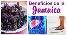 La planta de jamaica no solo es famosa por sus hermosas flores, sino también por sus beneficios de salud que han sido utilizados desde los tiempos antiguos.
