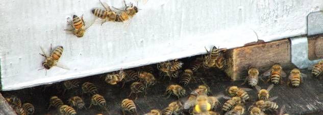 Superb Bienen im eigenen Garten oder in der Stadt zu halten ist der Traum vieler Hobbyimker Wir zeigen wie es geht