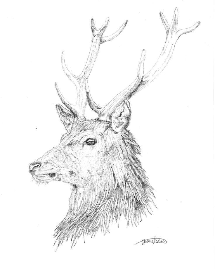 Stag $25  Print, art, drawing ww.petsbypencil.co.nz