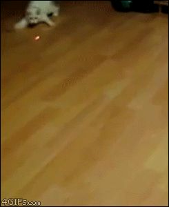 The gif that always cheers me up if I'm having a bad day - Imgur