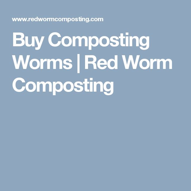 Buy Composting Worms | Red Worm Composting
