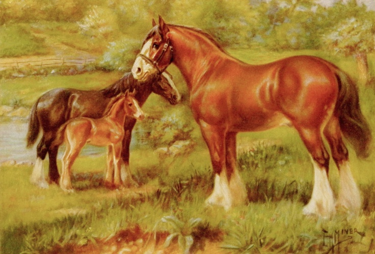 equestrian home decor | Clydesdale Vintage Horse Print, 1920s (Home Decor, Wall Hanging ...
