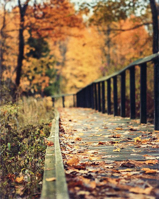 More autumn beauty – this just reminds me of some of the autumn walks I have taken, wrapped up warmly in my scarf and coat...