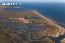 Aerial view of the saltmarshes and beach at Titchwell RSPB reserve, Norfolk, England