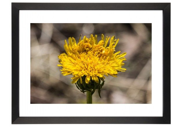 Other – Dandelion Photo – a unique product by Art-Of-Nature on DaWanda
