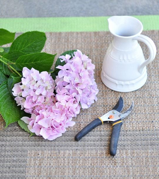 tips for growing and caring for hydrangeas (being mine just bloomed for the first time in over ten years, need to keep this handy)