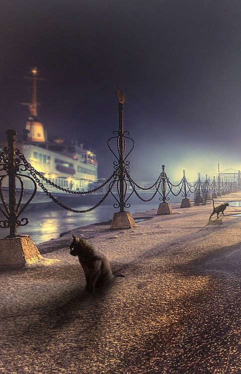 Cats are waiting for fisherman's in Istanbul      ADORABLE