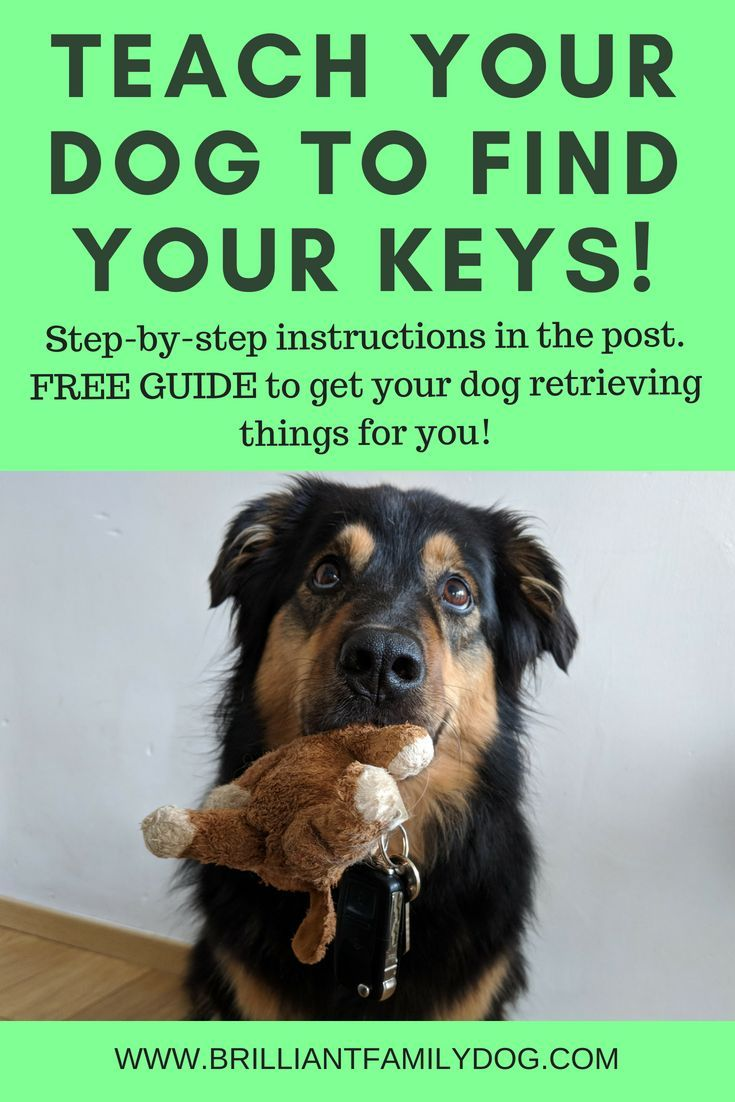Distancing For Dogs And Us Dog Training Dogs Training Your Dog