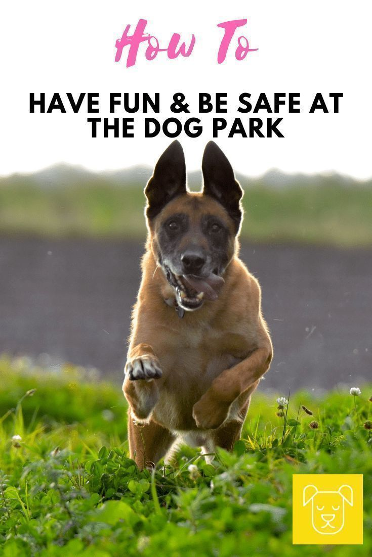 Before You Bring Your Dog To The Dog Park Click Through And Read