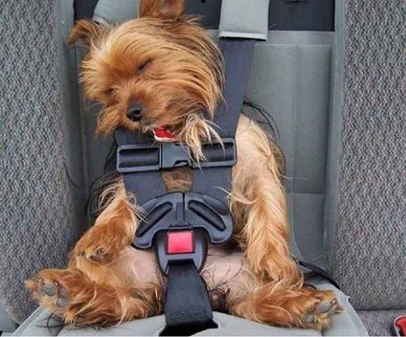 Gambar Binatang Lucu Anjing yang Tertidur