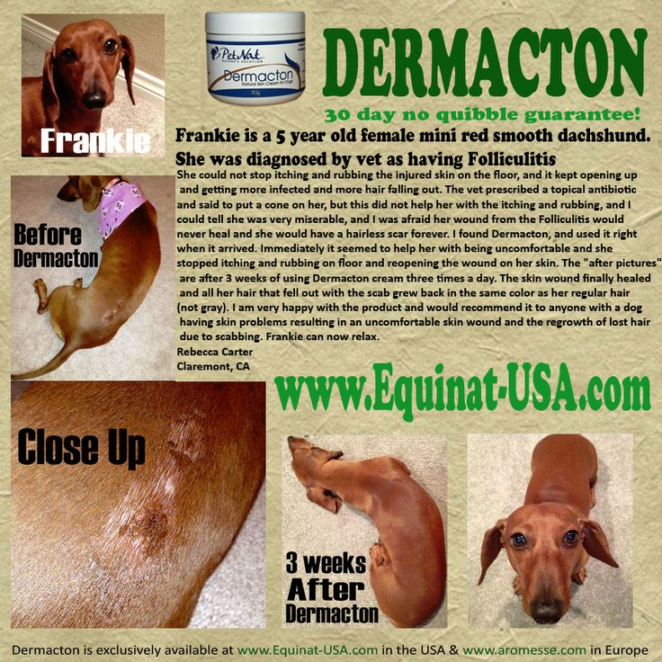 Dog had scabs on back healed with Dermacton cream. Vet