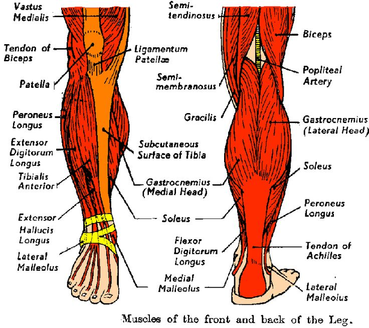 50 best pilates images on pinterest   human anatomy, muscle, Muscles