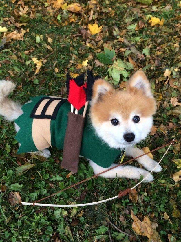 Robin Hood. | 27 Disfraces de Halloween extremadamente ingeniosos para tu perro