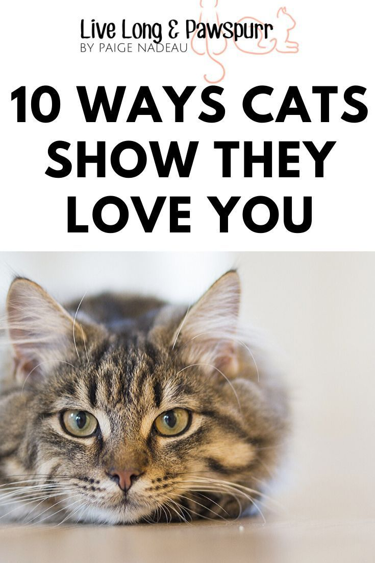 10 Ways Cats Show Their Love For You Live Long And Pawspurr In 2020 Death Of A Pet Cats Pet Grief