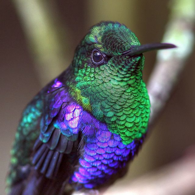 the hummingbirds daughter 1 why are they called hummingbirds a they are very light b they sing when they fly c their wings make a humming sound.