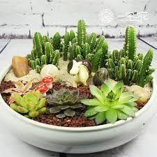 Resultado de imagem para plantas suculentas como cuidar