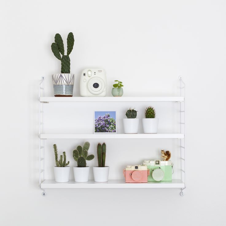 Cacti shelf / Candy Pop: www.candypop.uk.com/