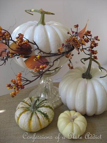 Thanksgiving white pumpkins and gourds