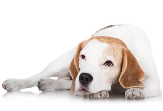 9 Dog Breeds with the Highest Cancer Rate | petMD