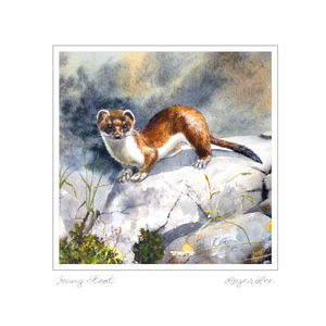 Young Stoat greeting card by Roger Lee