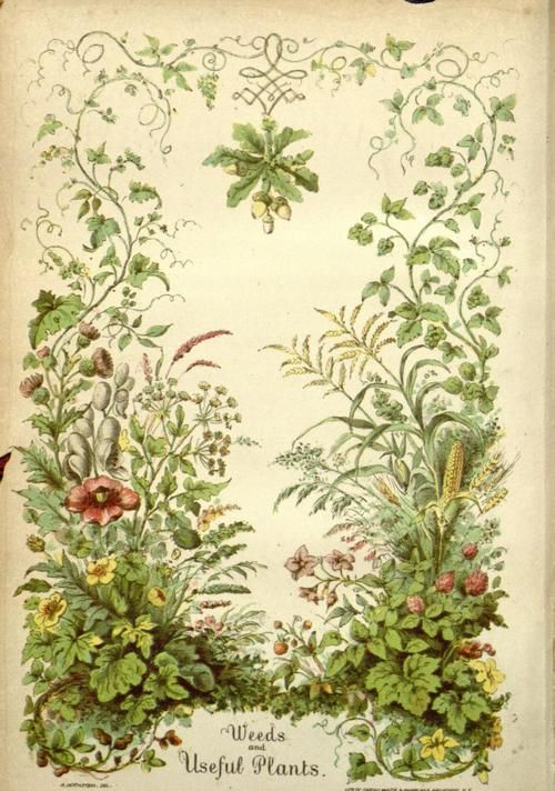 Frontispiece of 'Weeds and Useful Plants' by William Darlington (1859). Published by A.O. Moore and Co. Missouri Botanical Gard..., vintage printable