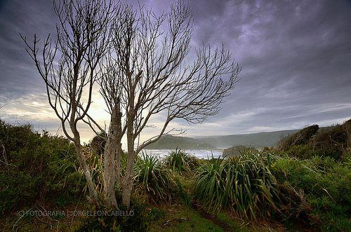 Arbol sin hojas - Llico Bajo (Patagonia - Chile)