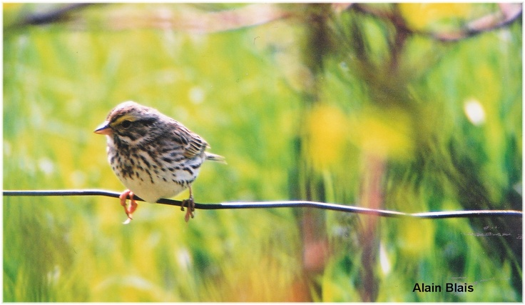 Bird on a wired fence