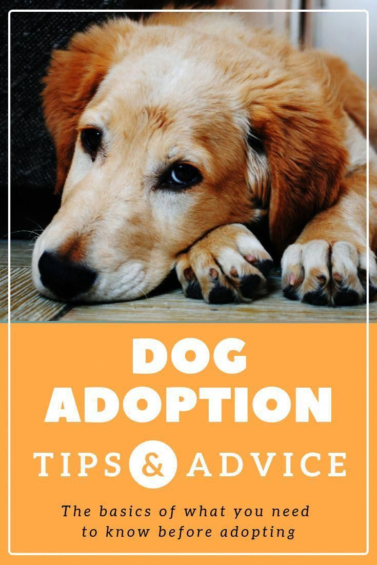 Optimistic How To Train Your Dog More Help Dog Training Dog